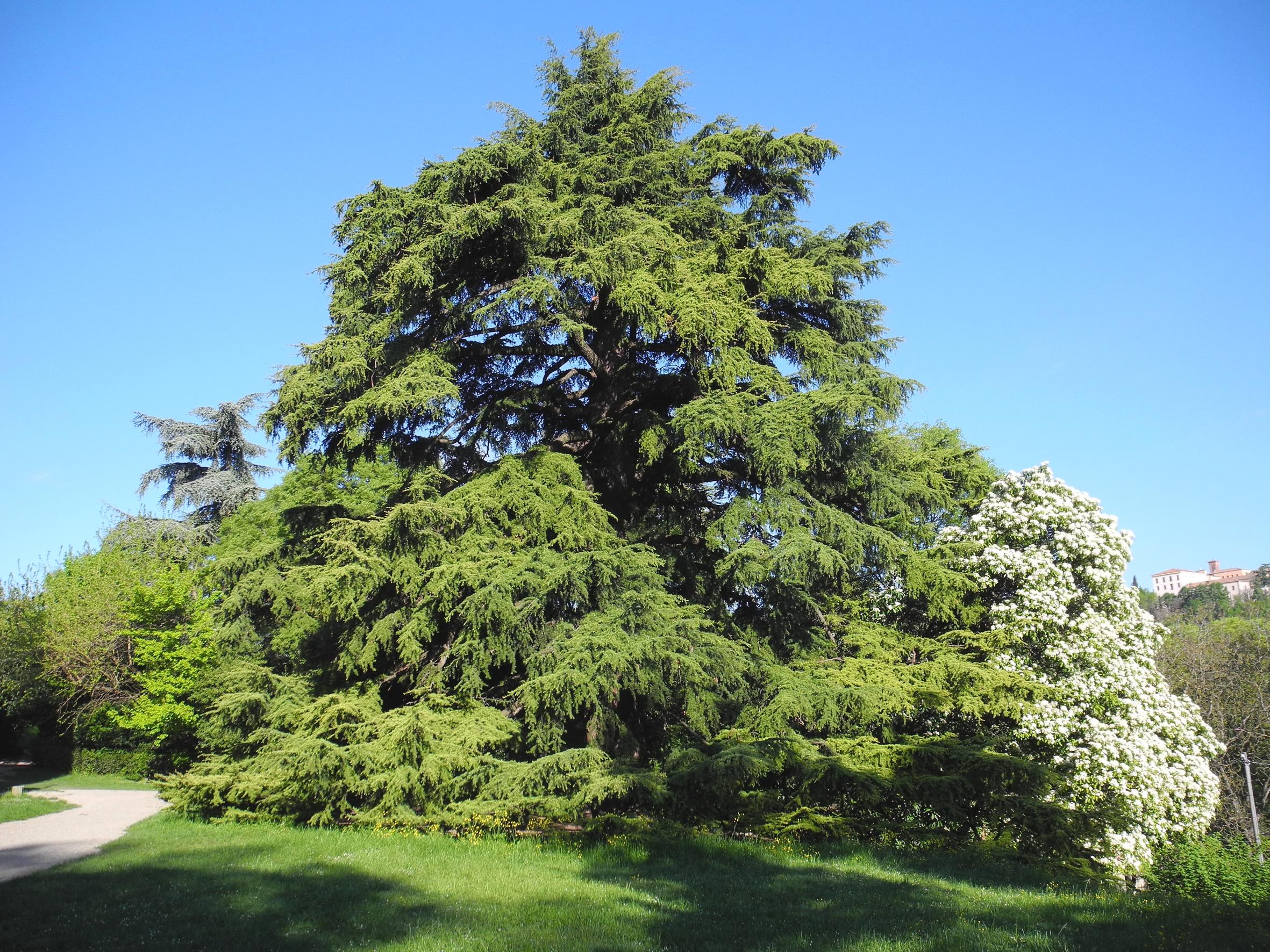 Grandi Alberi Da Giardini la cura dei grandi alberi nel parco villa ghigi – fondazione
