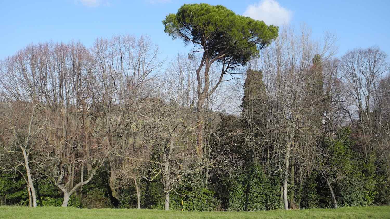 Diario Del Parco Fondazione Villa Ghigi