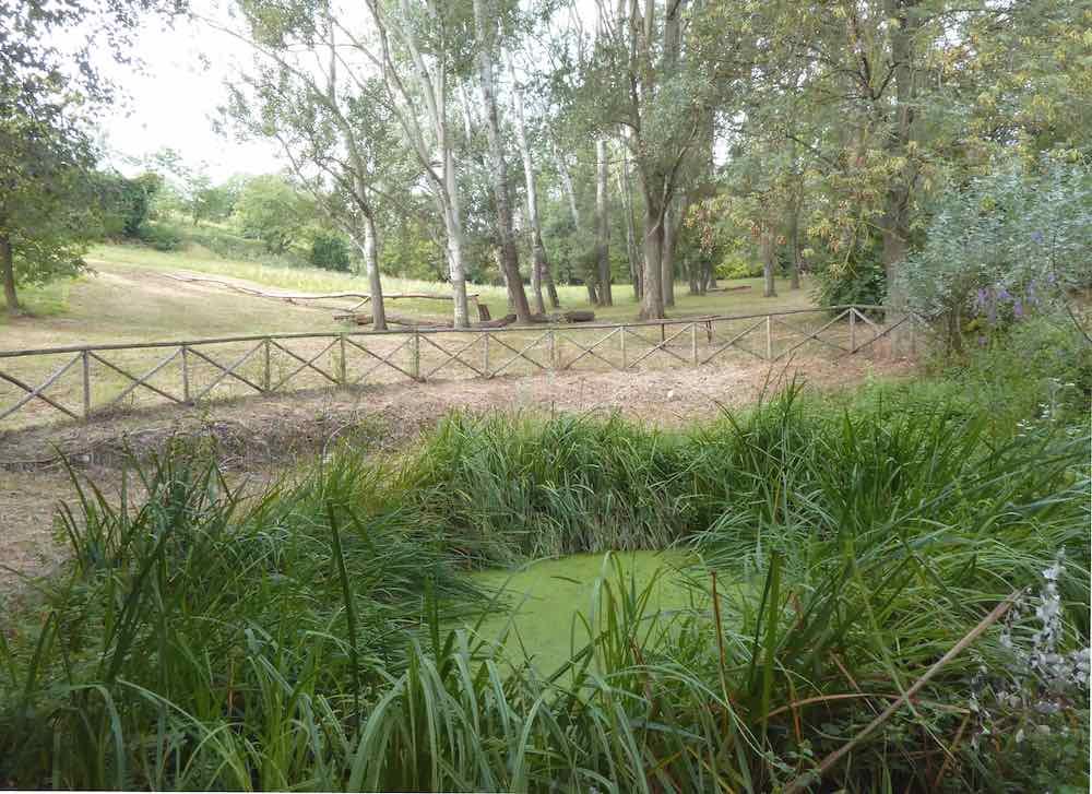 Proposte nel Parco Villa Ghigi - Ambiente